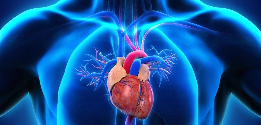 Løperhjertet skiller seg fra andre hjerter